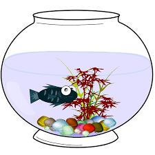 image:  fish in bowl
